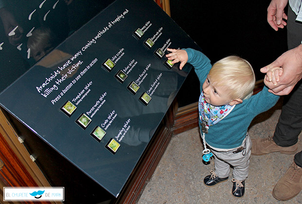El chupete de Mark en el museo de historia natural en Londres
